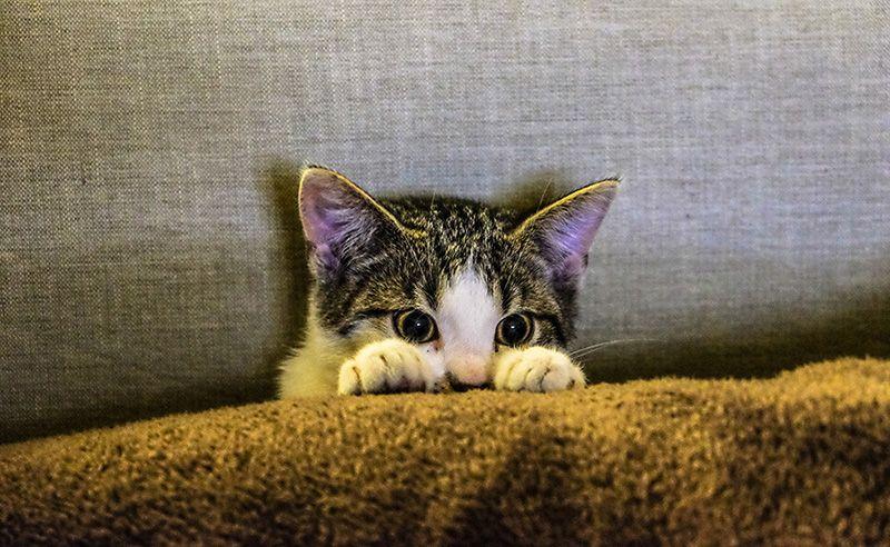 katt-tittar-fram