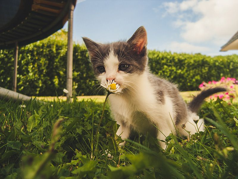 Kattunge-leker-utomhus